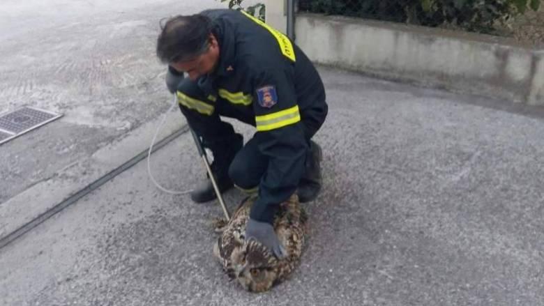Η «μάχη» των πυροσβεστών για την διάσωση ενός μπούφου (pics)