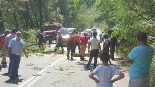 Ξάνθη: Δέντρο «προσγειώθηκε» σε όχημα... εν κινήσει