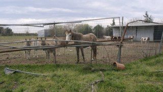 Σοκάρουν οι εικόνες: Πάρκο άγριων ζώων στην Πάτρα είχε μετατραπεί σε νεκροταφείο (aud)