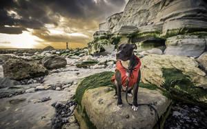 Beachy Head, Μεγάλη Βρετανία