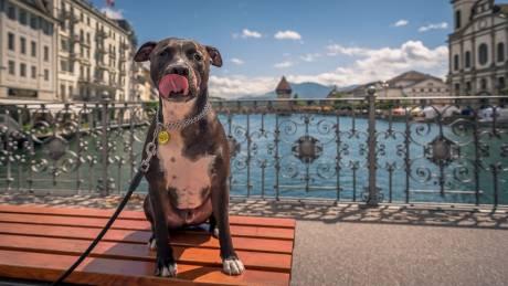 Alfie ο ταξιδιώτης: Ο χαριτωμένος σκύλος που κάνει το γύρο του κόσμου με το αφεντικό του