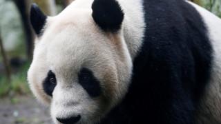 ΗΠΑ: Τα 20ά του γενέθλια γιορτάζει το γιγάντιο πάντα Τιαν Τιαν