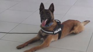 Ο σκύλος της αστυνομίας που πολεμά τα ναρκωτικά (vid)