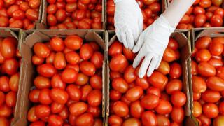 Η Μόσχα σκέφτεται να άρει εν μέρει το εμπάργκο στις εισαγωγές τουρκικής ντομάτας