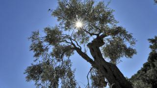 Καιρός: Μικρή άνοδος της θερμοκρασίας και ηλιοφάνεια το Σάββατο