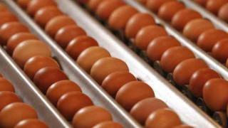 Εντατικοί έλεγχοι του ΕΦΕΤ για μολυσμένα αυγά στην Ελλάδα