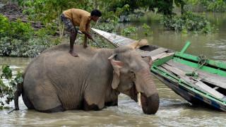 Βρήκε φρικτό θάνατο στη προσπάθειά του να βγάλει selfie με ελέφαντα (Vid)
