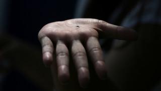 Ιταλία: κοριτσάκι πέθανε από ελονοσία - πιθανότατα κόλλησε την ασθένεια στο νοσοκομείο