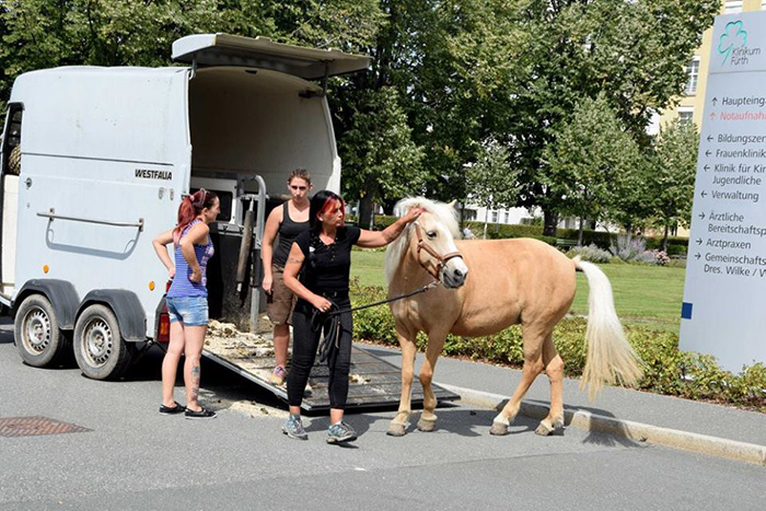 3xwyr horse meets with dying owner 3