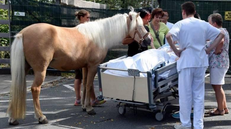 Έκαναν πράξη την τελευταία της επιθυμία: Ετοιμοθάνατη χάιδεψε το άλογό της (Pics)