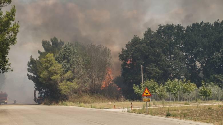 Πυρκαγιές σε Ηλεία και Αχαΐα