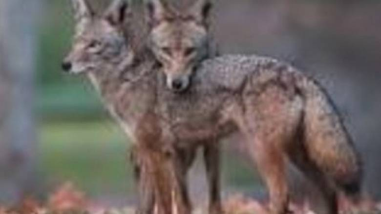 Σκυλιά «ζόμπι» περιφέρονται σε πάρκο του Σικάγο και προκαλούν τρόμο (Pic)