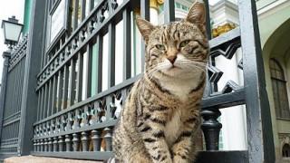 Ρωσία: Από ασφυξία πέθαναν διάσημες γάτες του Ερμιτάζ