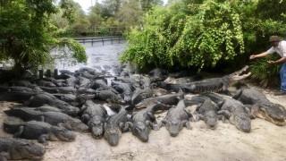 Ίρμα: τεράστια επιχείρηση σε πάρκο άγριας ζωής στο Ορλάντο για να προστατεύσουν 2000 αλιγάτορες