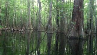 Στα μαγκρόβια δάση της Φλόριντα με ξεναγό τον καλύτερο φωτογράφο άγριας ζωής