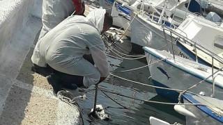 Τεράστια ρύπανση στις ακτές της Σαλαμίνας από τη βύθιση του δεξαμενόπλοιου (pics)