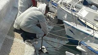 Σαλαμίνα: Σε επιφυλακή οι υπηρεσίες της Περιφέρειας από τη βύθιση του δεξαμενόπλοιου