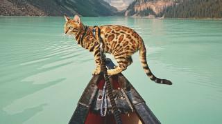 Σούκι: Η ταξιδιάρα γάτα που έχει λατρέψει το διαδίκτυο