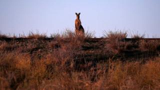 Προτροπή των Αρχών της Αυστραλίας στους κατοίκους: «Τρώτε καγκουρό, είναι πολλά»