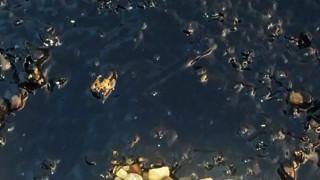 Πετρελαιοκηλίδα 350 τ.μ. στον Σαρωνικό προκάλεσε το Blue Star Patmos