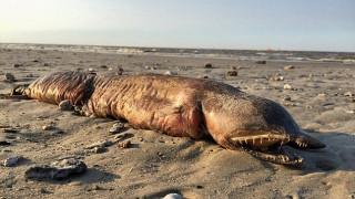 Ο τυφώνας Χάρβεϊ ξέβρασε θαλάσσιο «τέρας» σε παραλία του Τέξας (Vid)