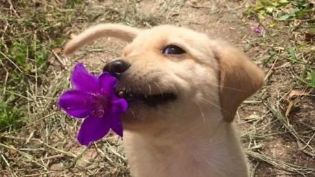 Όταν το ζωάκι σας θέλει να σας κάνει ...δώρο