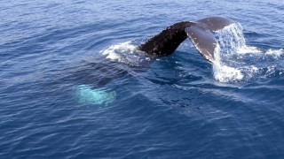 Κρήτη: Αγωνία για φαλαινάκι που ξεβράστηκε στην ακτή