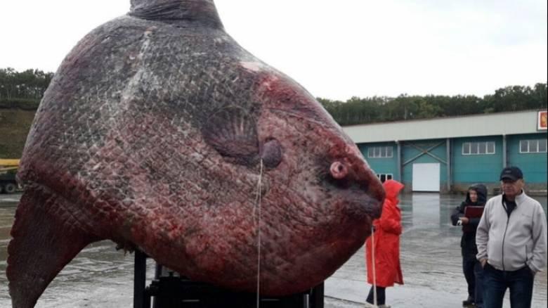 Ρώσοι ψαράδες αλίευσαν ψάρι ενός τόνου - τι τους δίχασε (pics)
