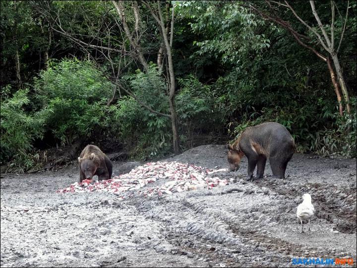 inside two bears eat
