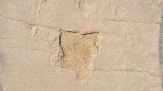 Στη Θεσσαλονίκη βρέθηκαν τα κλεμμένα απολιθώματα της Κισσάμου, συνελήφθη ένας 55χρονος