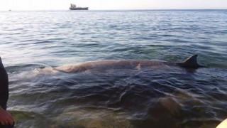 Αίσιο τέλος στην περιπέτεια της μικρής φάλαινας που ξεβράστηκε σε ακτή της Κρήτης (pics)