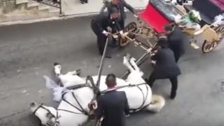 Άλογο που μετέφερε μελλόνυμφους... κατέρρευσε από τη ζέστη (vid)