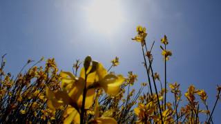Καιρός: Υψηλές θερμοκρασίες την Κυριακή