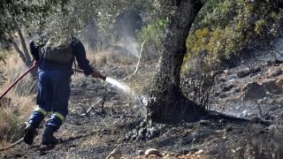 Καταδικάστηκε εθελοντής δασοπυροσβέστης για πρόκληση πυρκαγιάς στη Σάμο