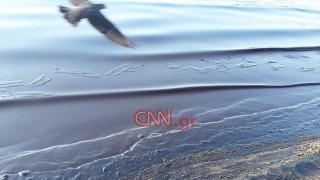 Σαρωνικός: Συνεχίζεται η προσπάθεια απορρύπανσης από τους τόνους μαζούτ - Οι ειδικοί προειδοποιούν