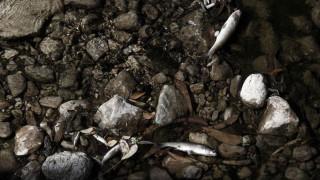Το ρέμα της Πικροδάφνης στο Παλαιό Φάληρο γέμισε με νεκρά ψάρια (pics)