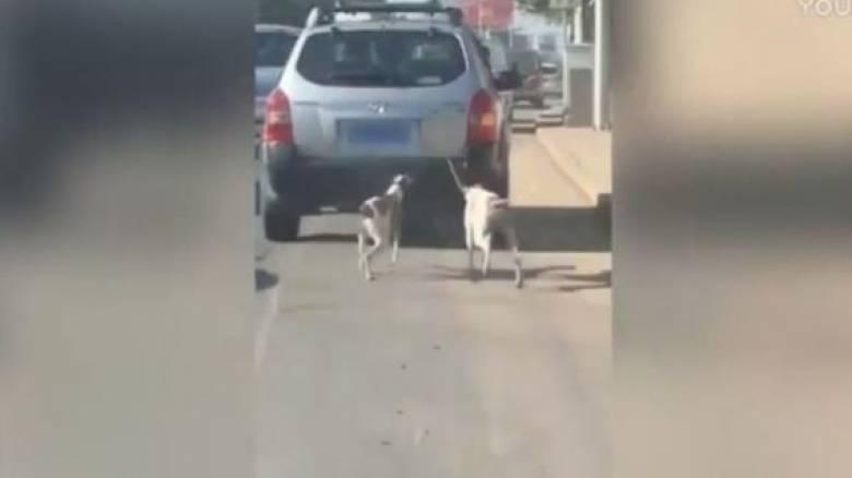 Κύμα αντιδράσεων για τον άνδρα που έδεσε σκυλιά σε αμάξι για να τα εκπαιδεύσει (Vid)