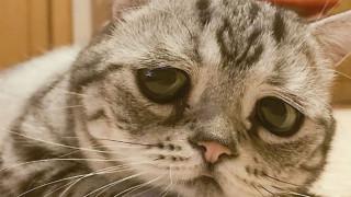Luhu: Η πιο θλιμμένη γάτα στον κόσμο