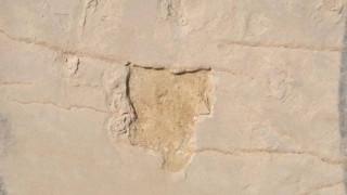 Ο 55χρονος ομολογεί ότι πήρε το απολιθώματα της Κισσάμου για να διακοσμήσει το σπίτι του
