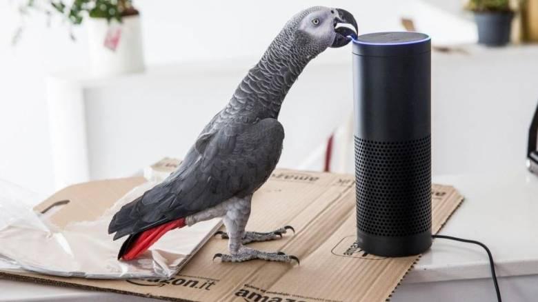 Απίστευτος παπαγάλος έκανε παραγγελία μέσω του Amazon (vid)