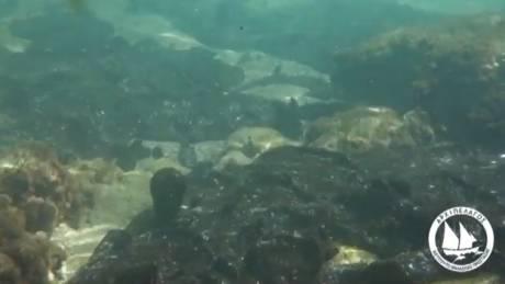 Υποβρύχια πλάνα από τη Σαλαμίνα: Κομμάτια μαζούτ σε όλο τον βυθό (vid)