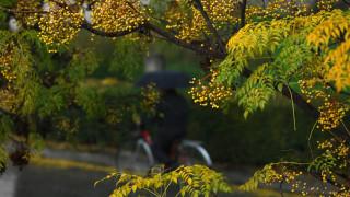 Μπαίνει και επίσημα το φθινόπωρο το βράδυ της Παρασκευής