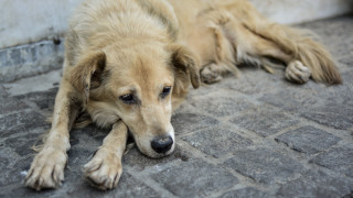 Συνταξιούχος καταδικάστηκε για κακοποίηση σκύλου - Βρέθηκε σε άσχημη κατάσταση στο διαμέρισμα
