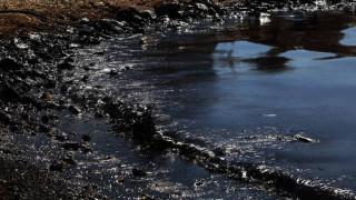Γενικό Χημείο του Κράτους: Καθαρά τα πρώτα δείγματα μαλακίων από το Σαρωνικό