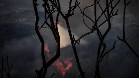 Μεγάλη πυρκαγιά στην Κασσάνδρα Χαλκιδικής