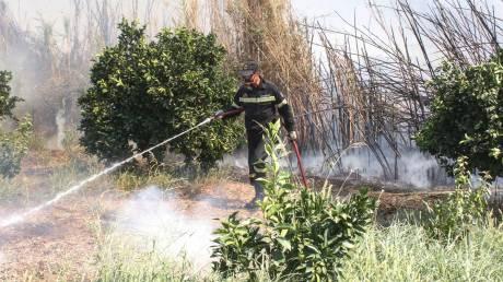 Υπό έλεγχο η φωτιά στα Τρίκαλα - Συνεχίζονται οι προσπάθειες κατάσβεσης σε Σέρρες και Δράμα