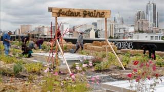 Καλλιέργεια φρούτων και λαχανικών σε ταράτσα: Το όραμα υπαλλήλων γραφείου του Παρισιού (pics)