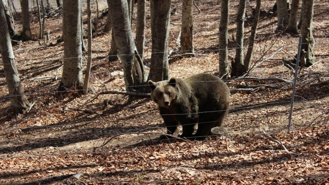 Καστοριά: Η «περιπέτεια» ενός άνδρα και του σκύλου όταν ήρθαν... αντιμέτωποι με αρκούδες (vid)