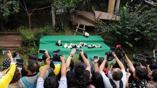 Έντεκα μικρά πάντα έκαναν την πρώτη τους δημόσια εμφάνιση στην Κίνα (pics)