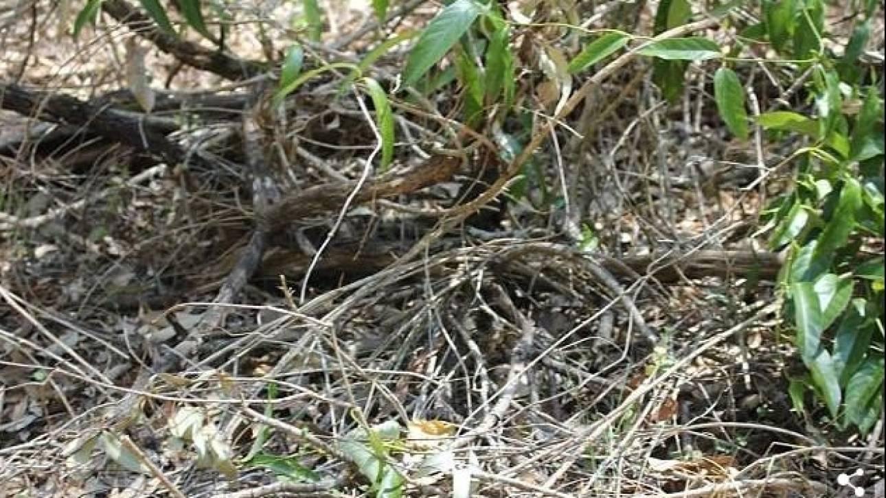 QUIZ: Μπορείτε να εντοπίσετε που είναι κρυμμένο ένα από τα πιο θανατηφόρα φίδια στον κόσμο;